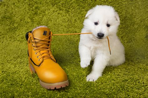 8 Signs Youre Ready To Get A Puppy by Signs That You Re Ready To Get A Emmy S Mummy