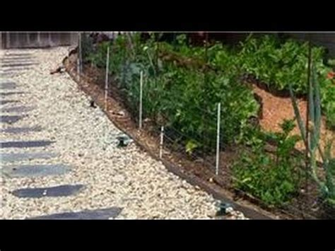 How To Keep Raccoons Out Of Your Garden by Vegetable Gardening How Do I Keep Raccoons Out Of