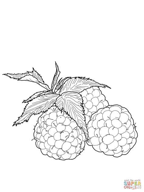 three raspberries coloring page free printable coloring ausmalbild himbeeren ausmalbilder kostenlos zum ausdrucken