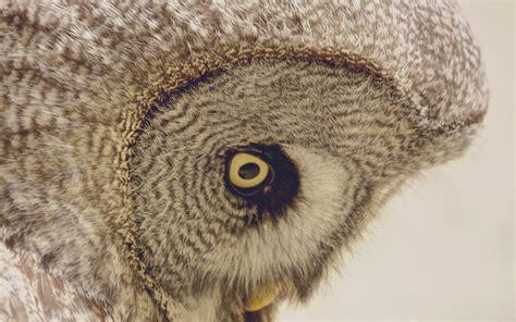 owl wallpaper for macbook 1280 x 1024