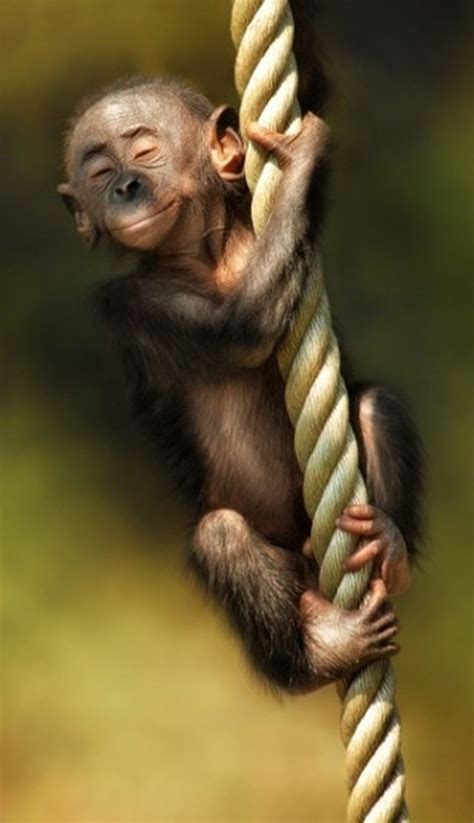 baby monkey swing 40 pictures of funny and cool animals