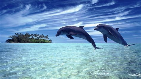 dolphin android dolphins android wallpapers for free