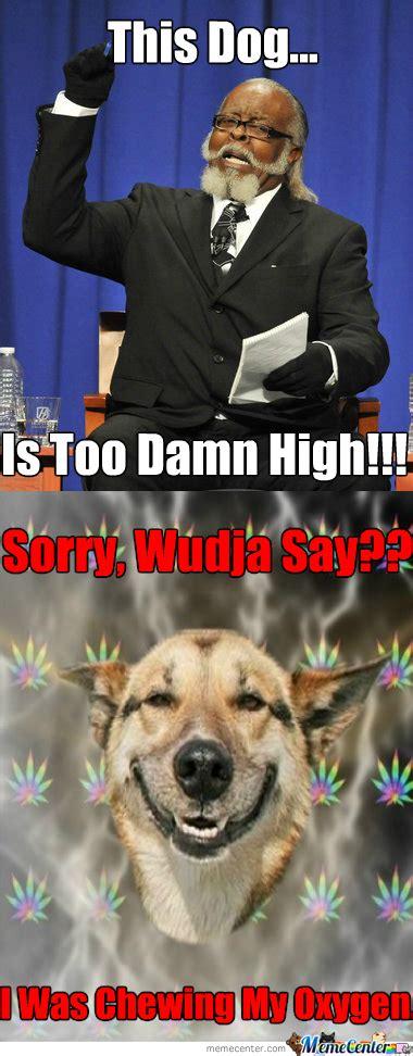 High Dog Meme - marijuana dog memes best collection of funny marijuana