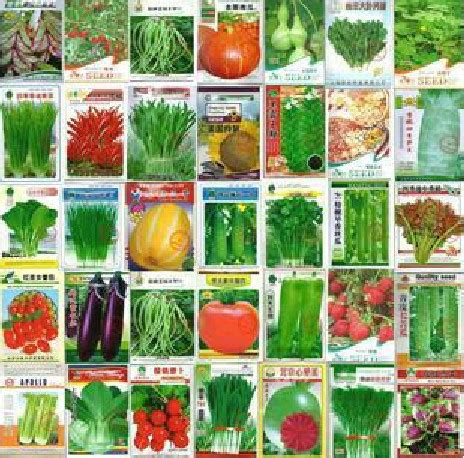 Hunan Balcony by 100pcs Vegetable Seeds Wholesale And Different Vegetable