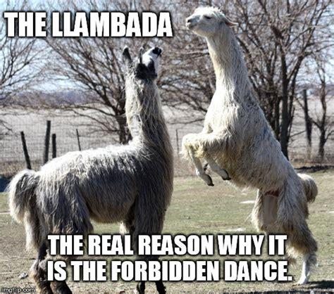 Dirty Dancing Meme - dirty dancing llama style imgflip
