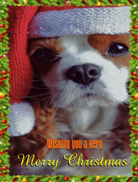 dog wishes   merry christmas wishes ecards greeting cards