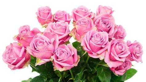 Blume Mit Weißer Blüte by Die 71 Besten Rosa Blumen Hintergrundbilder
