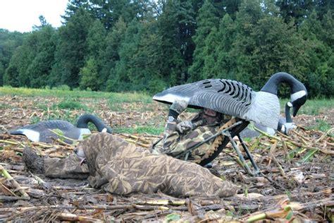 giant goose layout blind goose season dawns with abundance of birds