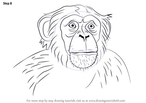 how to draw doodle step by step how to draw chimpanzee