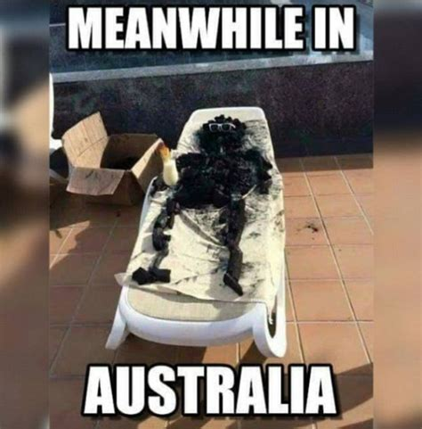 Funny Heat Memes - australians brave epic heatwave the only way they know how