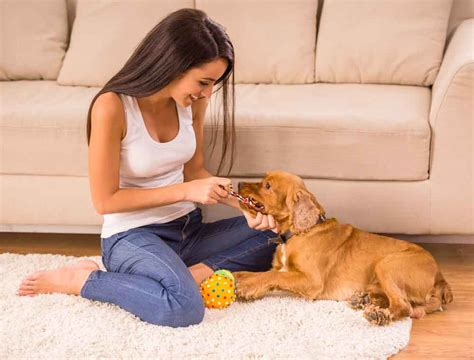 dog friendly houses how pet friendly homes motivate open minded behavior wave city center blog