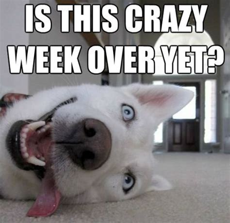 Weekend Dog Meme - dog weekend meme www pixshark com images galleries