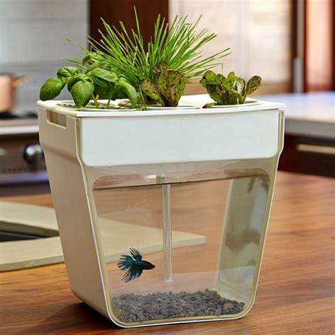 office herb garden aquaponics fish garden combines aquarium and herb garden