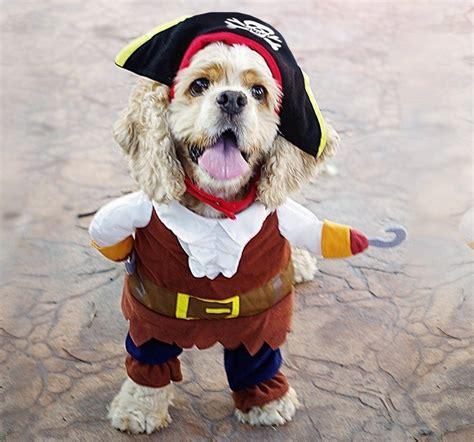 Komik Fantasia fantasia para cachorros as melhores fotos para voc 234 se
