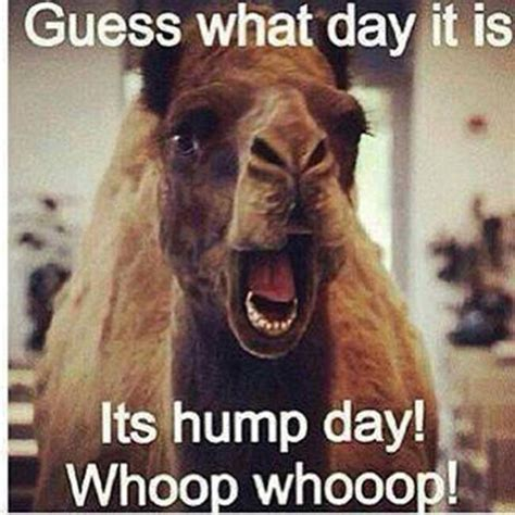 Hump Day Meme Funny - best 20 hump day humor ideas on pinterest