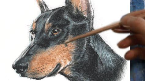 how to doberman how to draw doberman realism with pastel pencils 粵 葉浪點畫粉彩