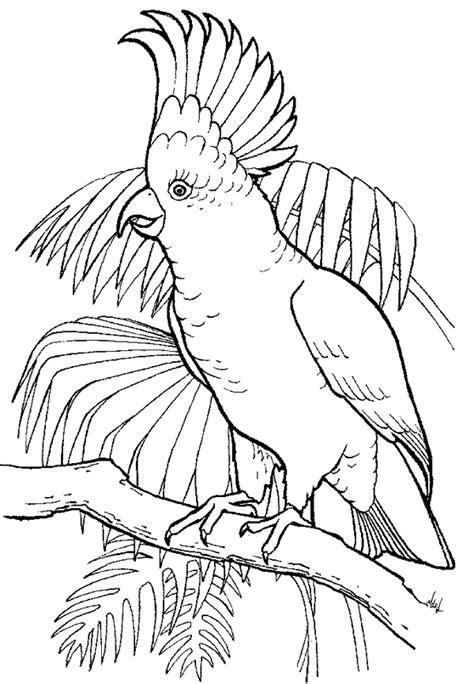 http www ahiva info colorear el arte de ense 241 ar colorear cacatua
