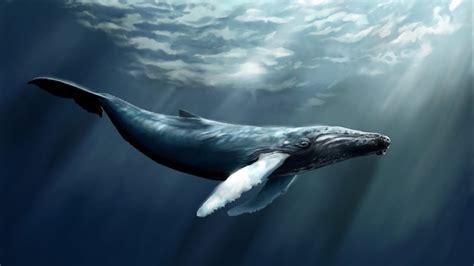 la ballena el juego de la ballena azul youtube