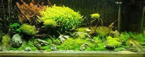 adrie baumann and aquascaping aqua rebell