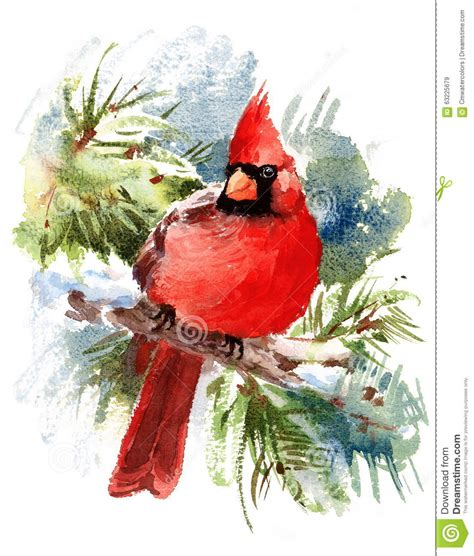 cardinal bird watercolor winter illustration hand drawn