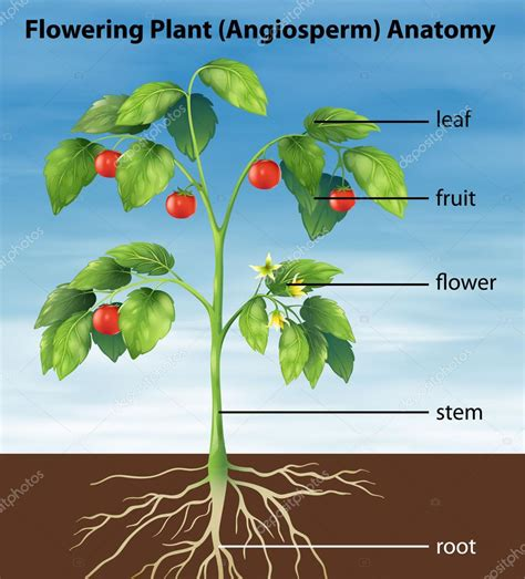 Läuse Auf Pflanzen 3917 by D Une Plante De Tomate Image Vectorielle
