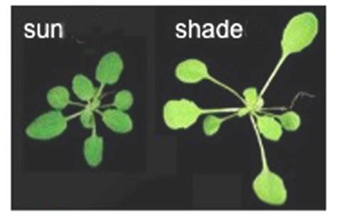 growing in the dark plants and light science project education com basic environmental photobiology