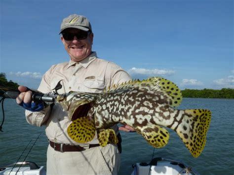fish aurukun fish  archer  ward   watson