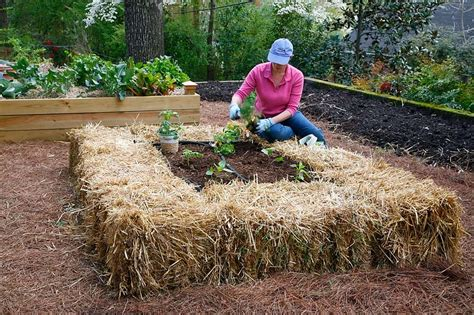 Hay Bale Garden by What The Hay Hay Bale Gardens Homestead Today