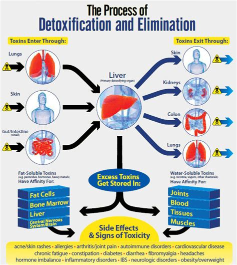Heavy Metal Detox Reactions by Food Grade Diatomaceous Earth Benefits Human Use Review