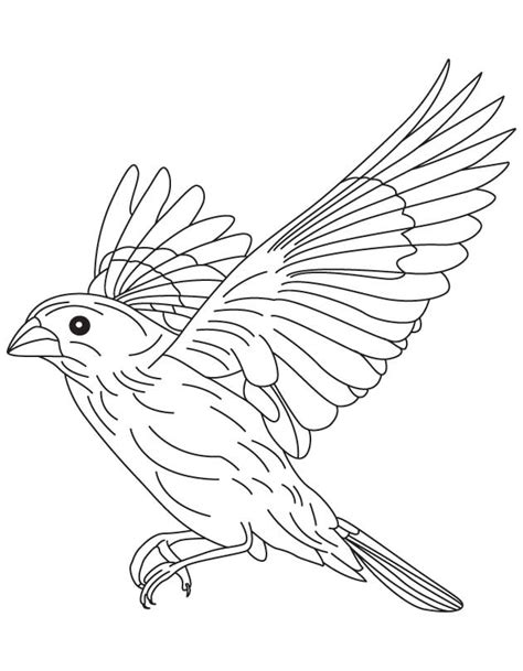 free coloring pages of birds in flight canary coloring page az coloring pages