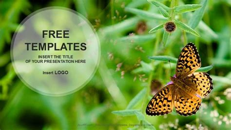 free powerpoint templates nature butterfly on flower nature powerpoint templates