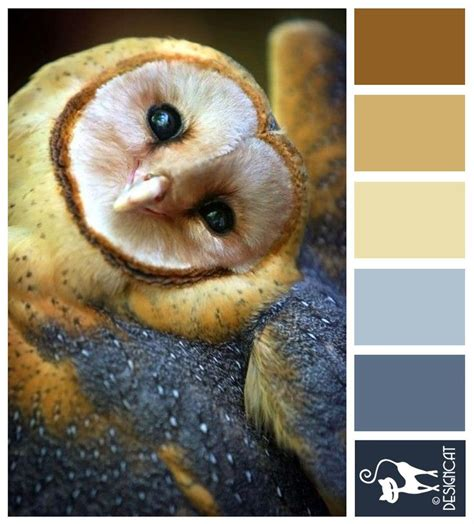 243 best designcat colour pallets images on