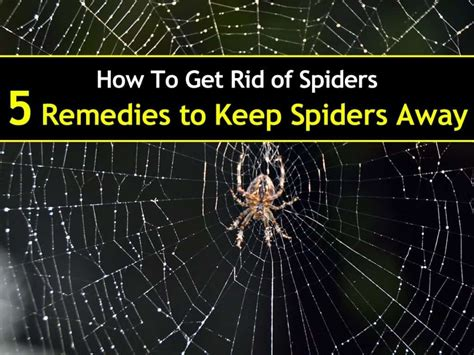 how to get rid of spiders in your house 28 images