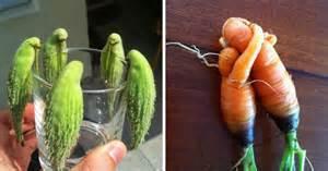 20 funny fruits vegetables