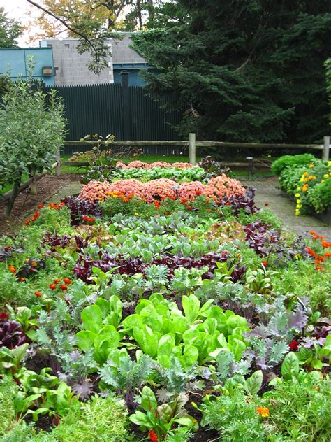 Garden Of Vegetables Winter Gardening Tips For March And April In New Zealand