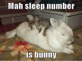 Sleep Number Bed Meme Rabbit Ramblings Bunny Meme Day Bonus