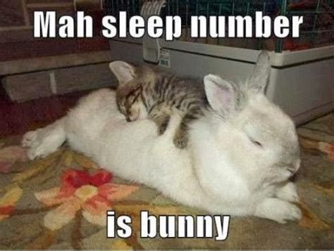 Funny Bunny Memes - rabbit ramblings february 2014