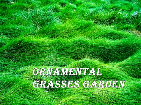 Design Great Landscape Designs Using Ornamental Grasses Grass Garden Design
