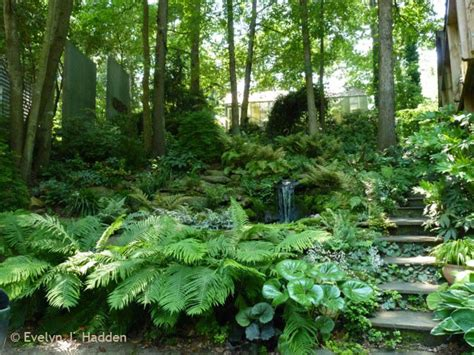Woodland Gardens by Woodland Garden Eclectic Landscape Other Metro By