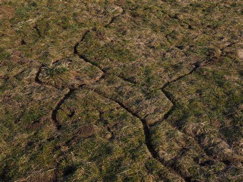 Batu Padang gambar alam hutan jalan batu bidang padang rumput