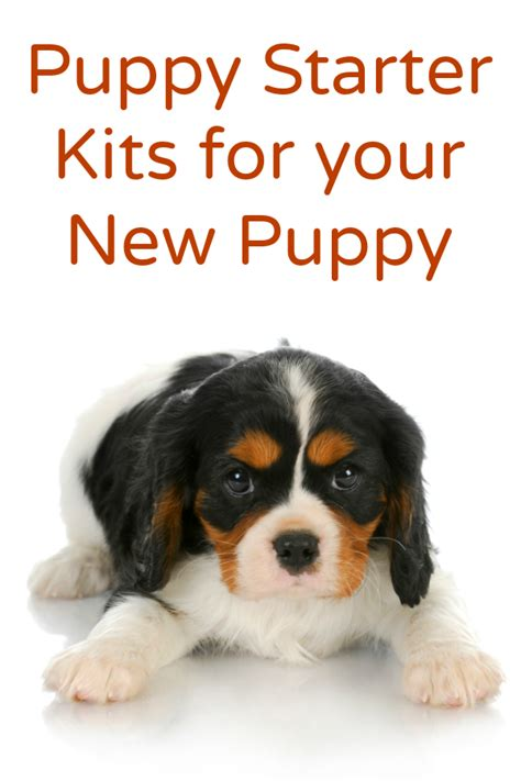 your new puppy puppy starter kits for your new puppy callista s ramblings