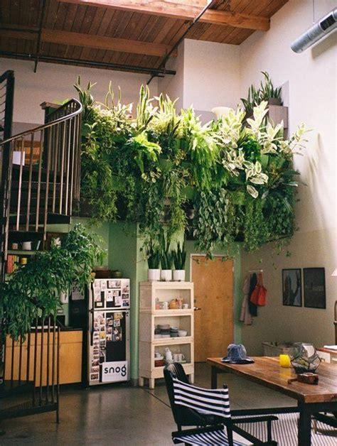 good houseplants for dark rooms come curare le piante da interno in inverno