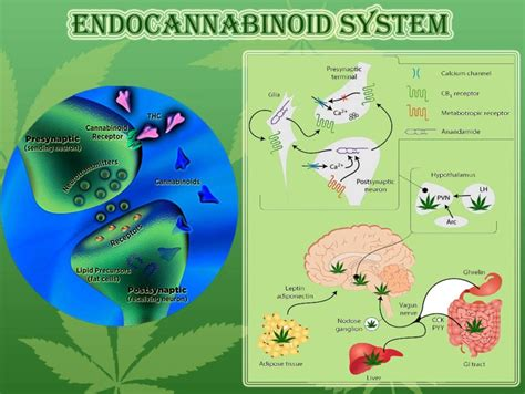 cbd hemp the secret cure of the human books caution understanding the endocannabinoid system might