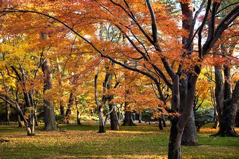 in fall newsletter of kanazawa 187 autumn foliage viewing spots