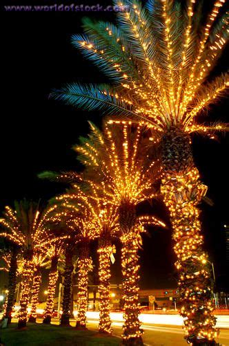 palm tree christmas light net palm trees lights it s beginning to look a lot like miami