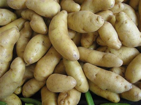 Potato Wiki by Fingerling Potato