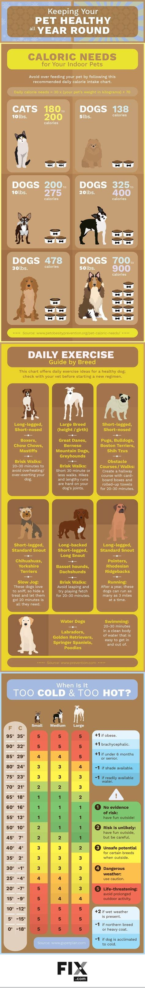 puppy daily schedule 1000 ideas about puppy schedule on puppy crate new puppy and australian