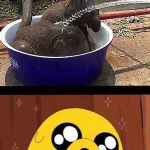 fb overload cuteness overload by rich231 meme center