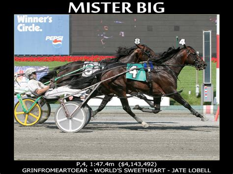 standardbred tattoo numbers abby stables mister big