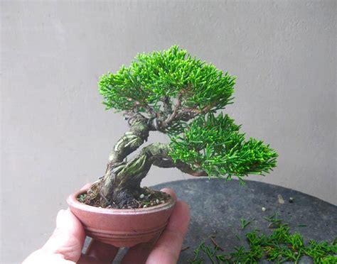 bonsai masterclass all you freshly trimmed tiny trees bonsai bark